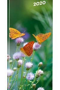 Motýle 2020